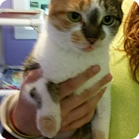 Adopt A Pet :: Rose - Port Clinton, OH