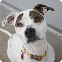 Adopt A Pet :: Remy - Pontiac, MI