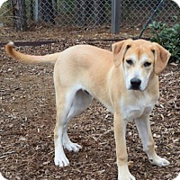 Adopt A Pet :: Dodger - Minneapolis, MN