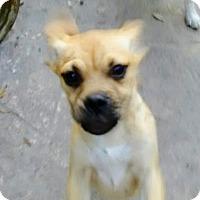 Adopt A Pet :: Myra East Colonial Petco - Orlando, FL