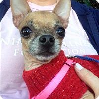 Adopt A Pet :: Haylie - Marina del Rey, CA