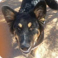 Adopt A Pet :: Adam - Tucson, AZ