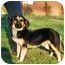 Photo 1 - Dachshund/German Shepherd Dog Mix Puppy for adoption in Bowie, Maryland - Casey