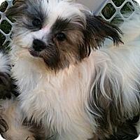 Adopt A Pet :: Gibbs - Hilliard, OH