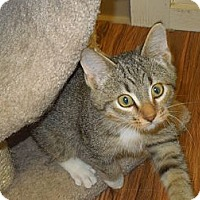 Adopt A Pet :: Alvin - Medina, OH