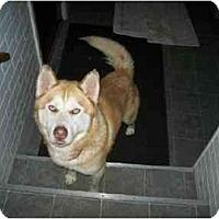 Adopt A Pet :: Red Dog - Belleville, MI