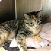 Adopt A Pet :: Netra - Vancouver, BC