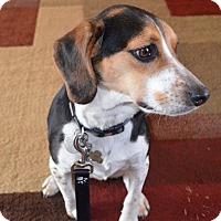 Adopt A Pet :: Jackson - Homewood, AL