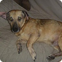 Adopt A Pet :: A307520 Augie/Pal - San Antonio, TX