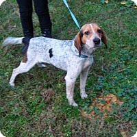Adopt A Pet :: Cleo - Dumfries, VA