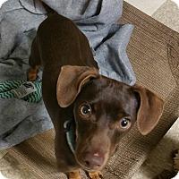 Adopt A Pet :: Kody - Lodi, CA