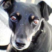 Adopt A Pet :: PuttPutt - Rancho Cordova, CA