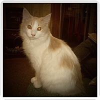 Adopt A Pet :: DENVER - Medford, WI