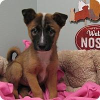 Adopt A Pet :: Cessna - Groton, MA
