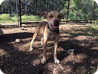 Terrier (Unknown Type, Medium) Mix Dog for adoption in Helotes, Texas - Ruby