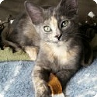 Adopt A Pet :: Slinky - McHenry, IL