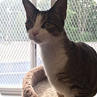 Adopt A Pet :: Sunbeam - Plainville, MA