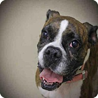 Adopt A Pet :: WHITNEY - Decatur, IL