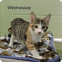 Adopt A Pet :: Wednesday - Slidell, LA