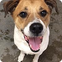 Adopt A Pet :: Barnie - Greensburg, PA
