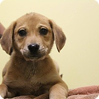 Adopt A Pet :: Matilda - Waldorf, MD