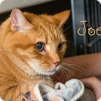 Adopt A Pet :: Joey - Somerset, PA
