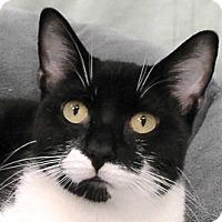 Adopt A Pet :: Chase - Redondo Beach, CA