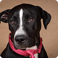 Adopt A Pet :: Star - League City, TX