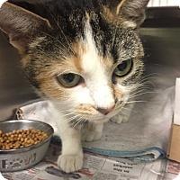 Adopt A Pet :: Pecan - Manchester, NH