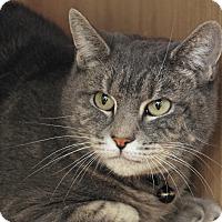 Adopt A Pet :: Josie - Waterbury, CT