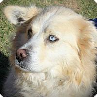 Adopt A Pet :: Laney - Oswego, IL
