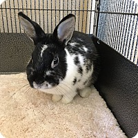 Adopt A Pet :: Alexis - Chula Vista, CA