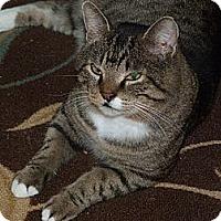 Adopt A Pet :: Elvis - Stafford, VA