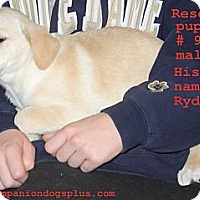 Adopt A Pet :: Ryder - Centerpoint, IN