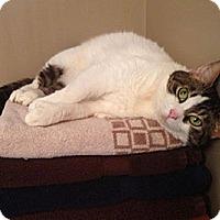 Adopt A Pet :: Hemi - Albany, NY