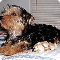 Adopt A Pet :: Hoss - Mooy, AL