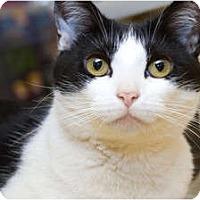 Adopt A Pet :: Glassel - Irvine, CA