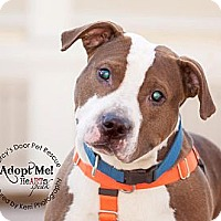 Adopt A Pet :: Nicky - Medina, OH