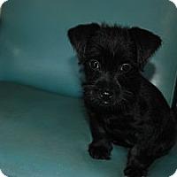 Adopt A Pet :: Marla - Harrisburgh, PA