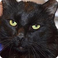 Adopt A Pet :: Mickey - N. Berwick, ME