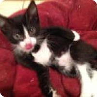 Adopt A Pet :: Maui - East Hanover, NJ