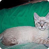 Adopt A Pet :: Walter - Phoenix, AZ