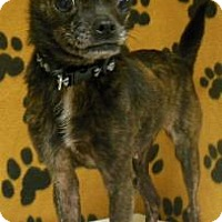 Adopt A Pet :: Shelly - Gary, IN