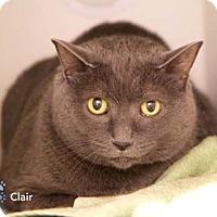 Adopt A Pet :: Clair - Merrifield, VA
