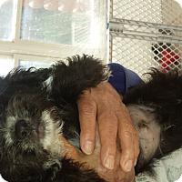 Adopt A Pet :: Pepper - Algonquin, IL