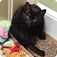 Adopt A Pet :: Marci H. - Homewood, AL