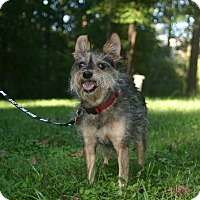 Adopt A Pet :: Buddy Boy- Courtesy Post - Alpharetta, GA