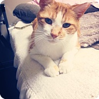 Adopt A Pet :: Henry - Chicago, IL