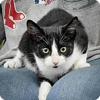 Adopt A Pet :: Seven - Dublin, VA