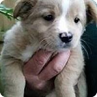 Adopt A Pet :: Brenna - Gainesville, FL